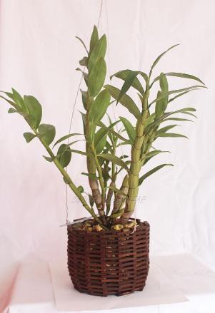Ukuran/Dimensi Pot : Tinggi : 12 cm Diameter : 14 cm Tebal : 0,5 cm Berat : 450 gr